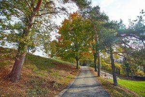 Mapri Asfaltiranje poti med drevjem Golf Bled